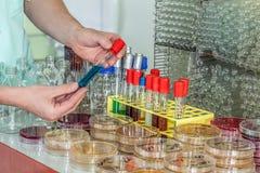 Chemik ręka z próbną tubką Zdjęcia Royalty Free