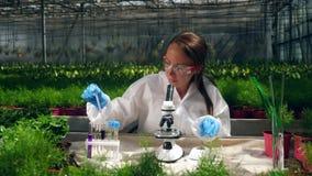Chemikalien werden auf Anlagen durch einen weiblichen Agronomen getestet stock video footage