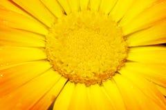 Cheminée d'une fleur de gerbera photos libres de droits