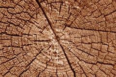 Cheminée de vieil arbre. Fond Images libres de droits