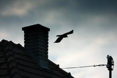 Cheminée et corbeau photos libres de droits