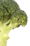 cheminée fraîche de broccoli Images libres de droits