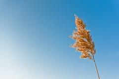 Cheminée tubulaire simple Photographie stock libre de droits