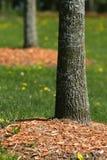 Cheminées d'arbre photos stock
