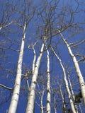 Cheminées d'Aspen images libres de droits
