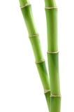 Cheminées en bambou chanceuses Photo libre de droits