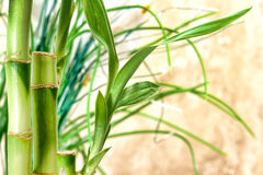 Cheminées et lames en bambou Photographie stock libre de droits