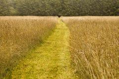 Chemin à la forêt Photo stock