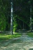 Chemin à la forêt foncée la nuit Image stock