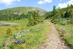 Chemin à la montagne Photographie stock