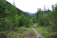 Chemin à la montagne Photo libre de droits