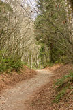 Chemin à travers des arbres de forêt Photographie stock