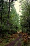Chemin à travers des forêts humides Photographie stock libre de droits