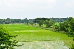 Chemin à travers des paddyfields Photo stock