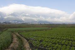 Chemin à travers des terres cultivables Image libre de droits