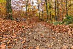 Chemin à travers la forêt Images libres de droits