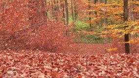 Chemin à travers la forêt 10 Images stock