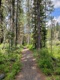 Chemin à travers la forêt photographie stock