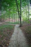 Chemin à travers la forêt Photo libre de droits