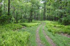 Chemin à travers la forêt Photos libres de droits