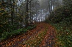 Chemin à travers la forêt d'automne Image libre de droits