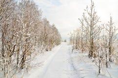 Chemin à travers la forêt de jeunes arbres de bouleau beaucoup de neige blanche Photos libres de droits