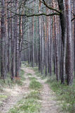 Chemin à travers la forêt dense Image stock
