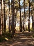 Chemin à travers la forêt, Terschelling Photos libres de droits