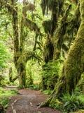 Chemin à travers la forêt tropicale Image stock