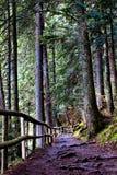 Chemin à travers la forêt verte dans les montagnes Photo stock