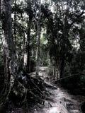 Chemin à travers la jungle Photos stock