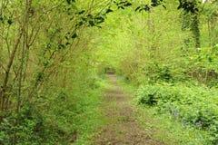 Chemin à travers la région boisée feuillue Photo libre de droits