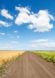 Chemin à travers la zone de blé sous le ciel bleu Photographie stock libre de droits
