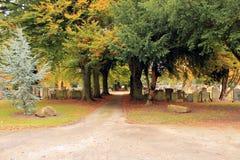 Chemin à travers le cimetière sous un auvent des arbres Photographie stock libre de droits