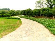 Chemin à travers le jardin image stock