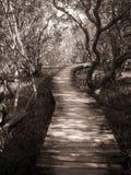 Chemin à travers le palétuvier Photographie stock