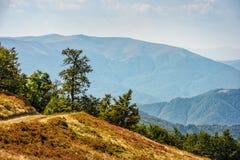 Chemin à travers le pré de côté de colline dans Carpathiens Photos libres de droits