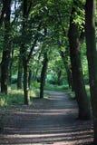 Chemin à travers les bois Photo stock