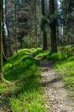 Chemin à travers les bois photos stock