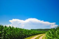 Chemin à travers un pré de maïs en Italie Image stock