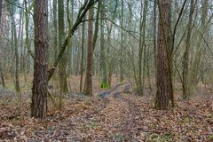 Chemin à travers une forêt dense et sombre avec les feuilles tombées image stock