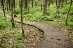 Chemin écologique fabriqué à partir de les planches en bois pour une promenade dans le bois Photographie stock libre de droits