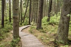 Chemin écologique fabriqué à partir de les planches en bois pour une promenade dans le bois Photos stock