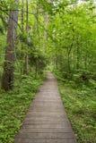 Chemin écologique fabriqué à partir de les planches en bois pour une promenade dans le bois Images libres de droits