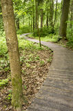 Chemin écologique fabriqué à partir de les planches en bois pour une promenade dans le bois Photographie stock