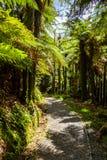 Chemin étroit dans une forêt Photos libres de droits