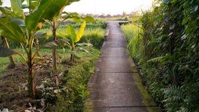 Chemin étroit menant par la nature de Balinese Photographie stock libre de droits