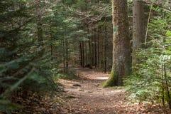 chemin étroit pour augmenter dans la forêt Images stock