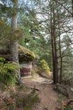 chemin étroit pour augmenter dans la forêt Photos stock