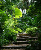 Chemin #1 de jardin Photos libres de droits